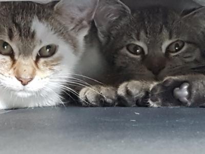 Berti (links) und Babsi (rechts)