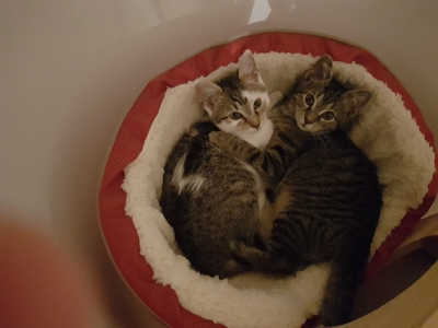 Berti und Babsi im Körbchen